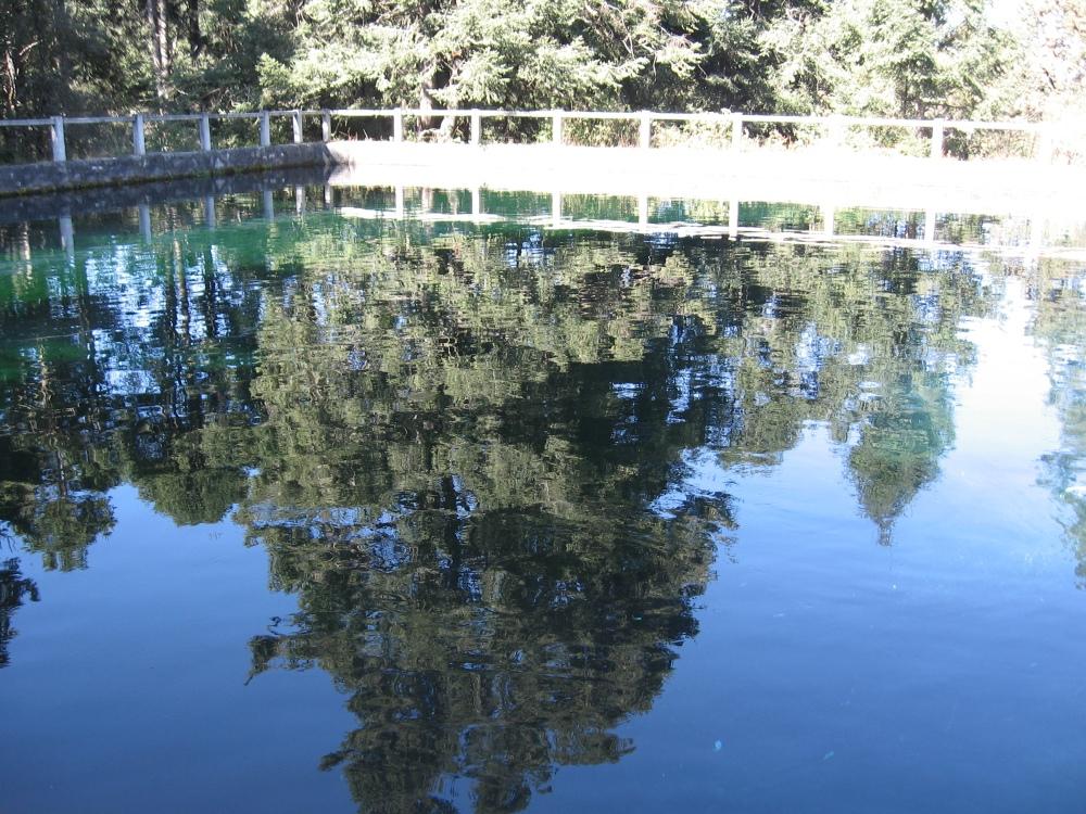 Arbol reflejado en  estanque